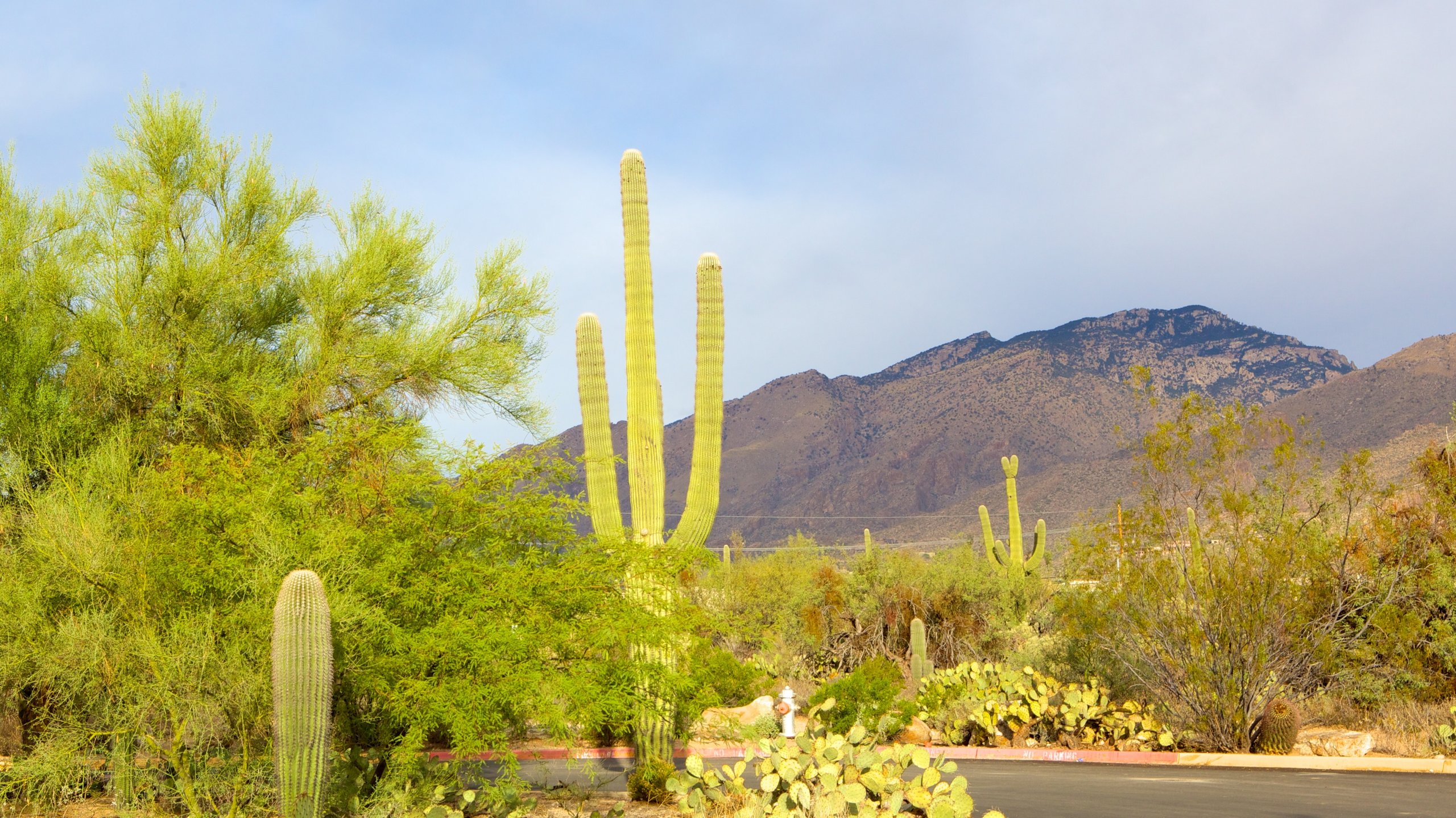 Sabino Canyon, Tucson, Arizona, United States of America