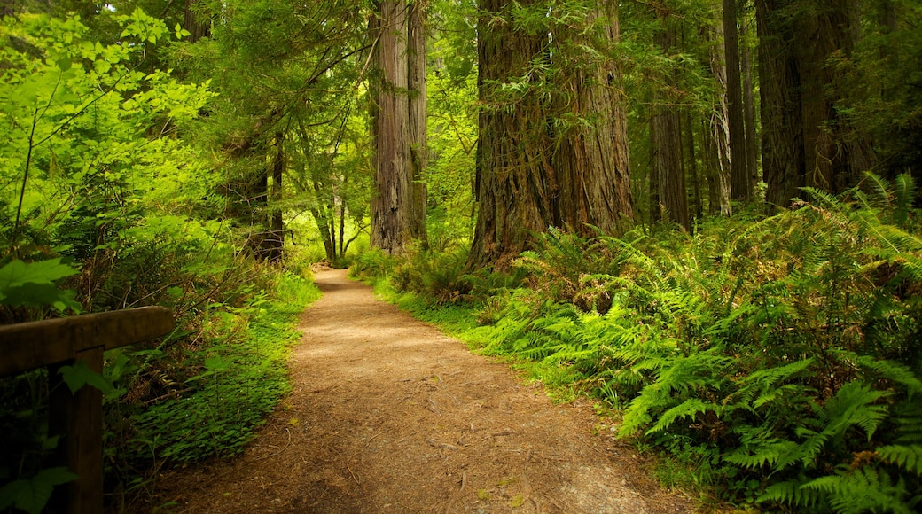 Redwood National and State Parks featuring forest scenes