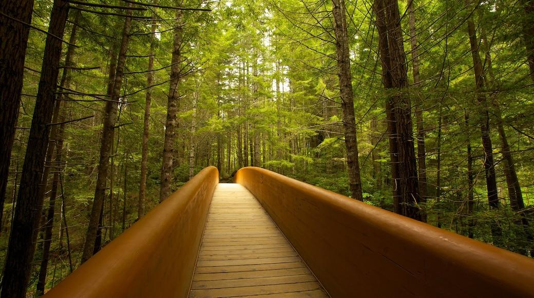 Parque nacional y parques estatales de Redwood mostrando escenas forestales y un puente