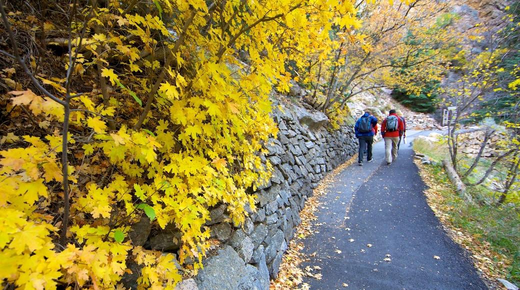 Timpanogos Cave National Monument joka esittää puisto, syksyn lehdet ja patikointi tai kävely