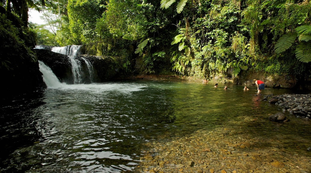 Upolu showing rainforest, a cascade and a river or creek