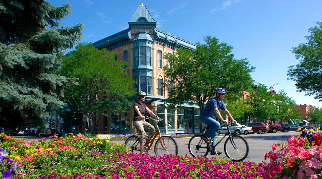 Fort Collins ofreciendo imágenes de calles, flores y una ciudad