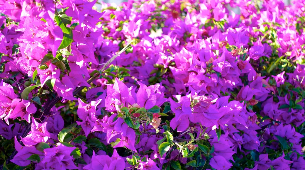 Providenciales featuring flowers