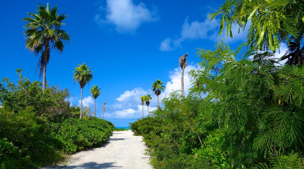 Grace Bay som inkluderar tropisk natur och kustutsikter