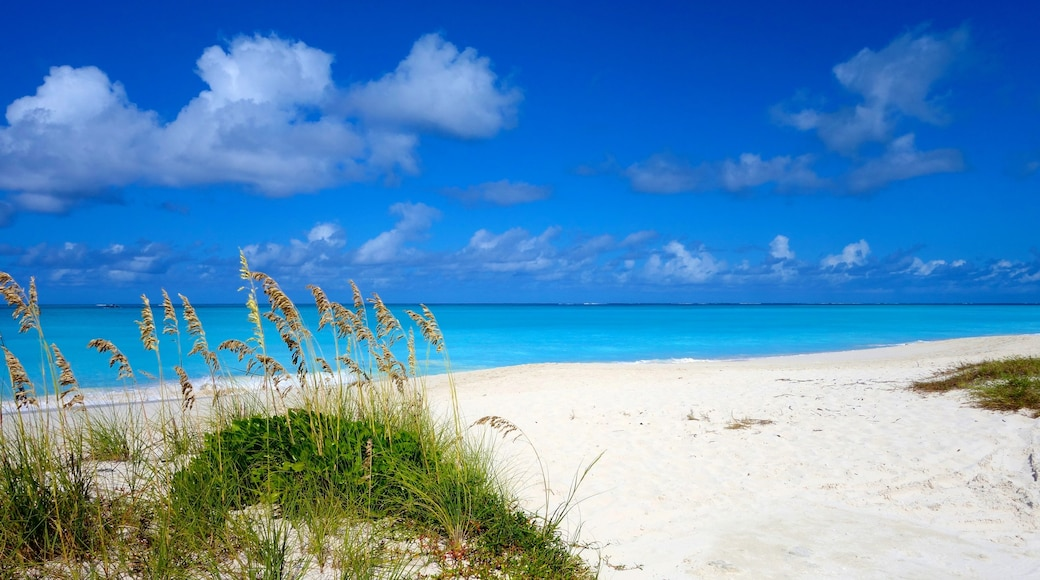 Turks and Caicos showing tropical scenes and a beach