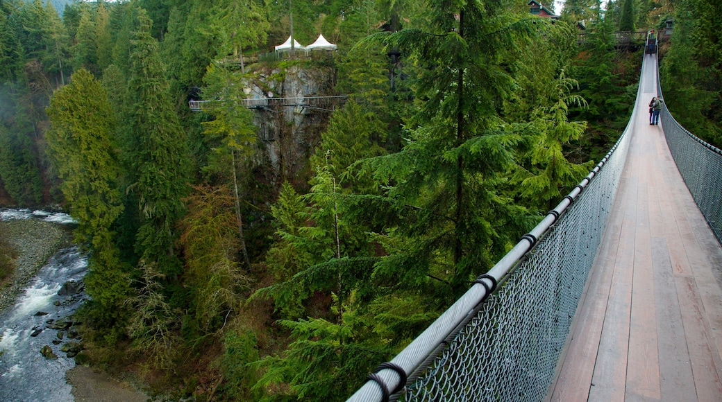 Capilano Suspension Bridge showing a suspension bridge or treetop walkway, rapids and forest scenes