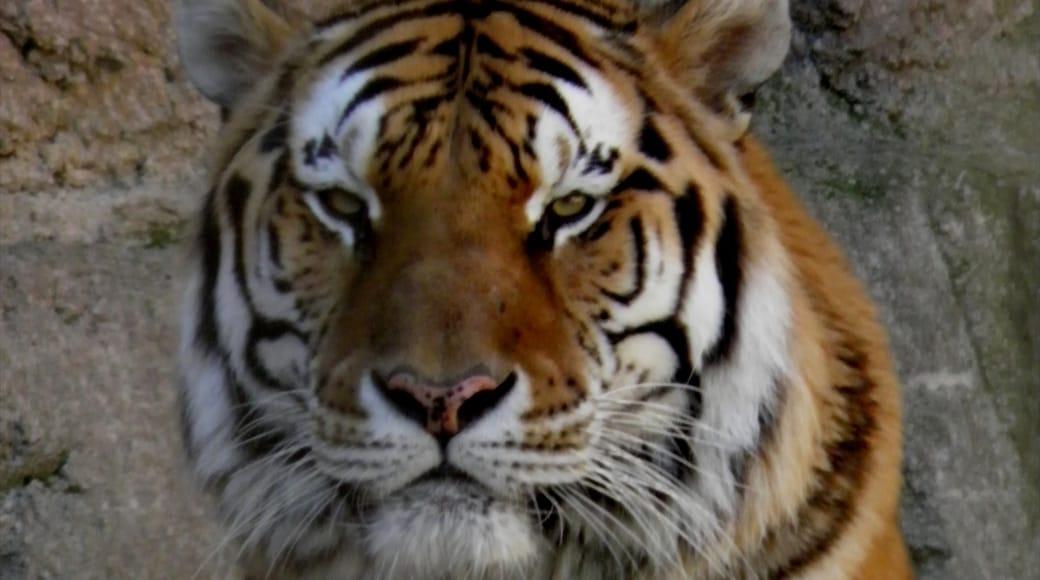 Racine Zoological Gardens showing zoo animals and dangerous animals