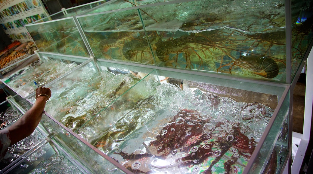 Dinh Cau which includes marine life