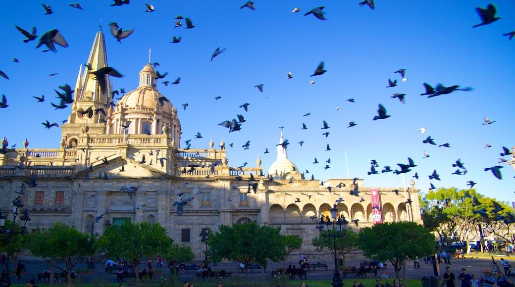 Catedral metropolitana ofreciendo una iglesia o catedral, patrimonio de arquitectura y una ciudad