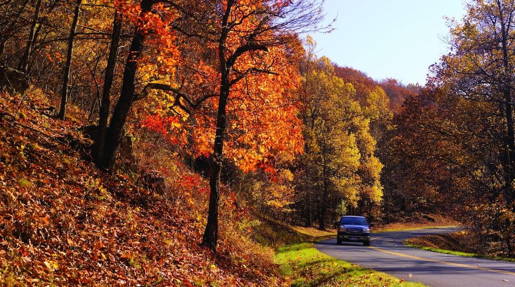 Roanoke caratteristiche di foresta e foglie d\'autunno