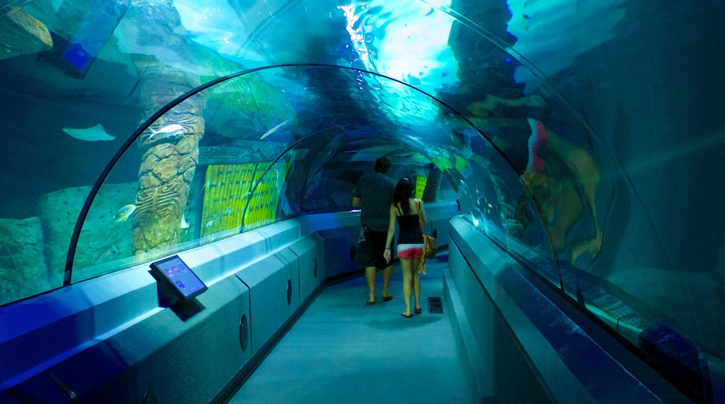 Underwater World Sea Life which includes interior views and marine life as well as a couple