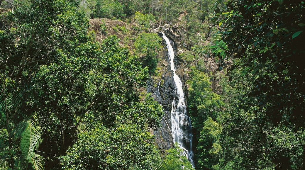 Mapleton showing rainforest and a waterfall