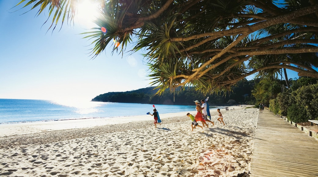 Noosa Beach showing tropical scenes and a sandy beach as well as a family