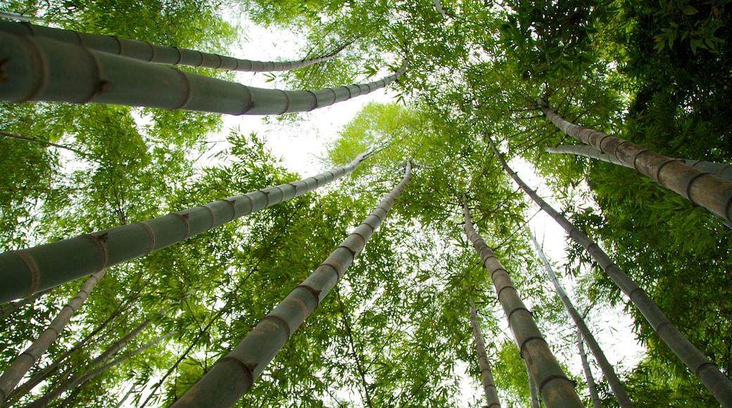 Parc Pies Descalzos qui includes jardin et scènes forestières