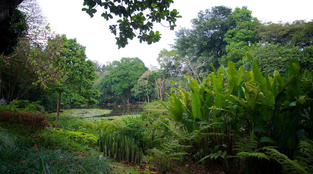 Jardin botanique JoaquínAntonioUribe qui includes parc