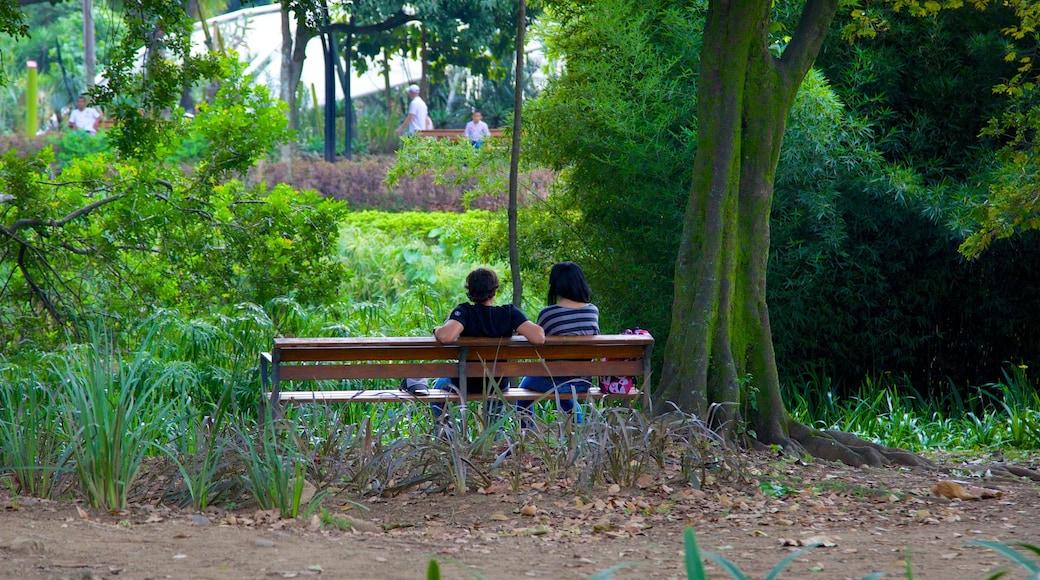 Jardin botanique JoaquínAntonioUribe qui includes jardin aussi bien que couple