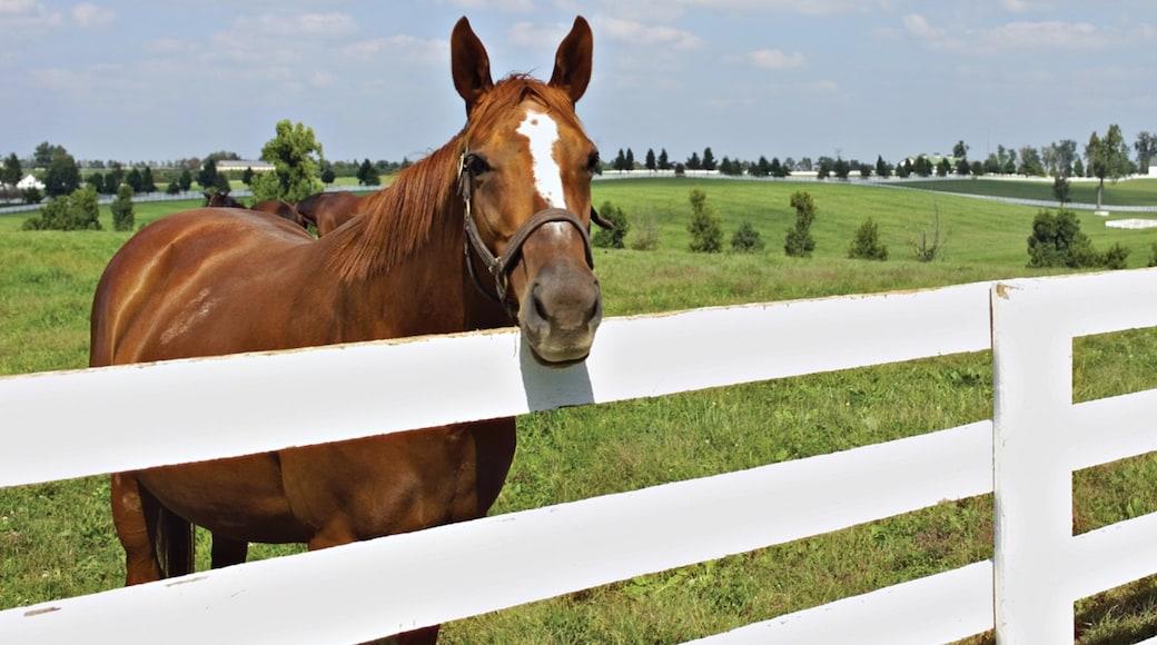 Lexington featuring farmland and land animals