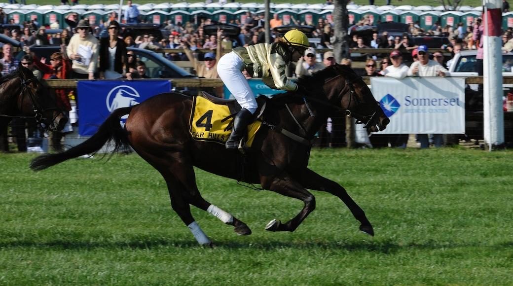 索默塞 其中包括 騎馬 和 體育活動