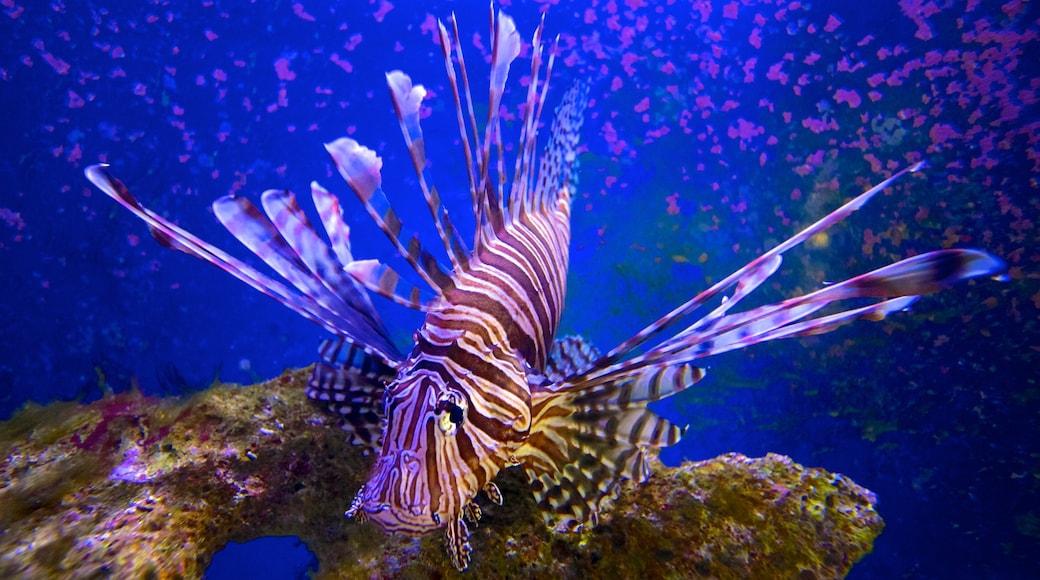 John Pennekamp Coral Reef State Park mit einem Meeresbewohner