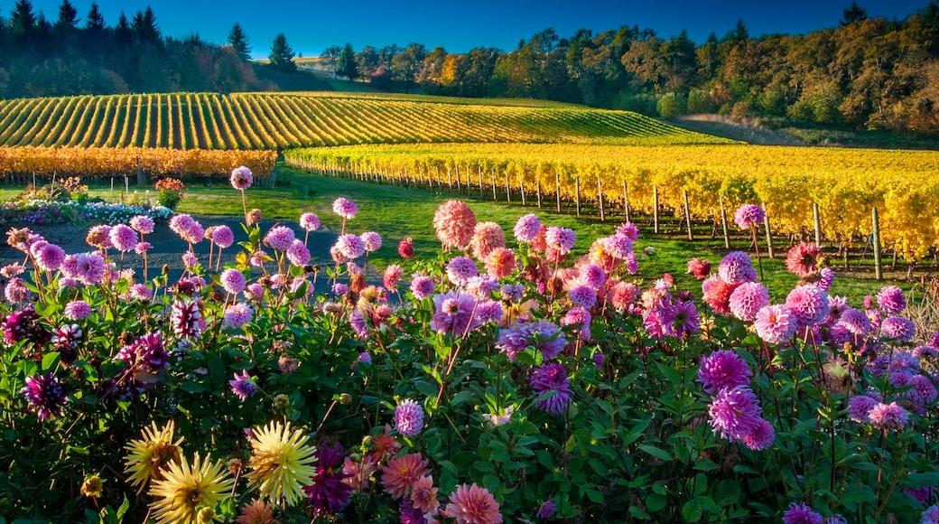 Salem caratteristiche di terreno coltivato e fiori