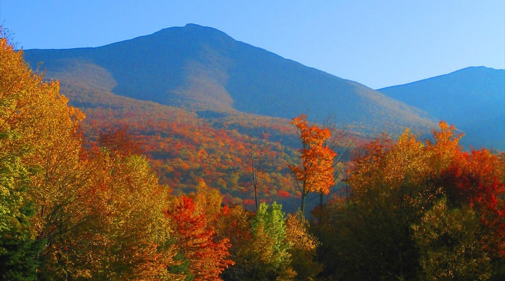 White Mountains showing autumn leaves, landscape views and mountains