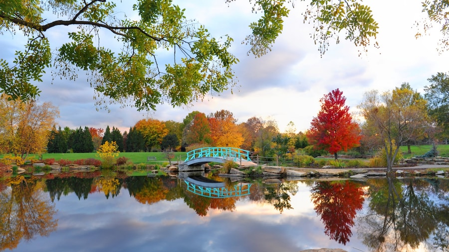 Dayton featuring a bridge, a park and autumn leaves