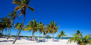 Islamorada showing a beach and tropical scenes