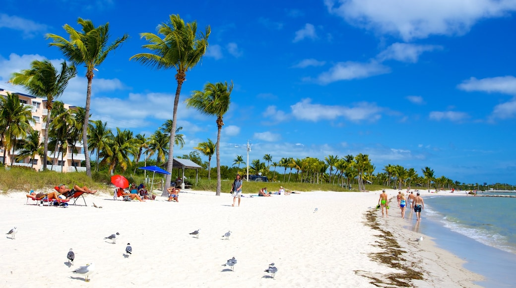 Smathers Beach featuring tropical scenes, bird life and a sandy beach