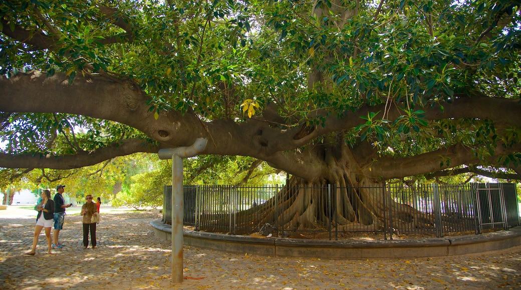 Recoleta ofreciendo un parque