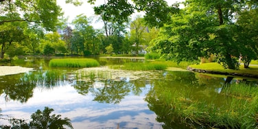 Halifax Public Gardens showing a pond and a park