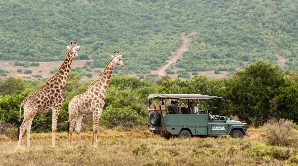 約翰尼斯堡 其中包括 陸上動物, 野生動物園探險 和 寧靜風景