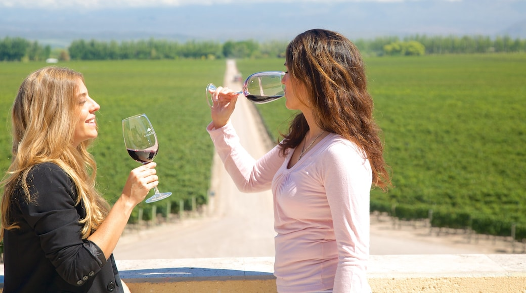 Exploitation viticole Catena Zapata mettant en vedette boissons et vues