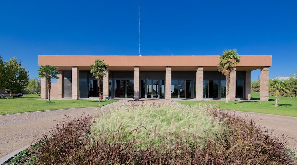 Exploitation viticole Navarro Correas mettant en vedette jardin