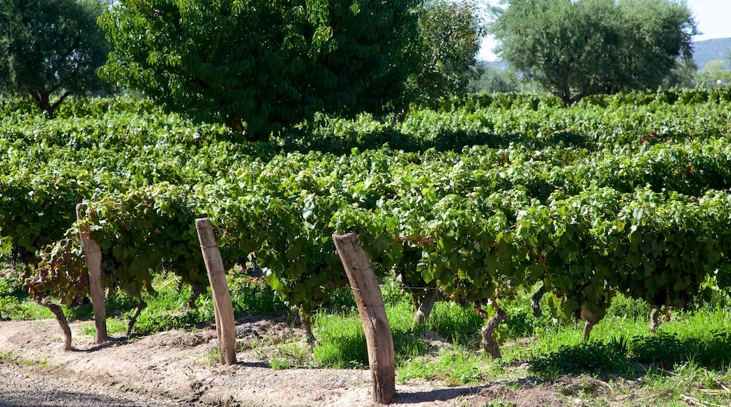 Lagarde Winery featuring farmland