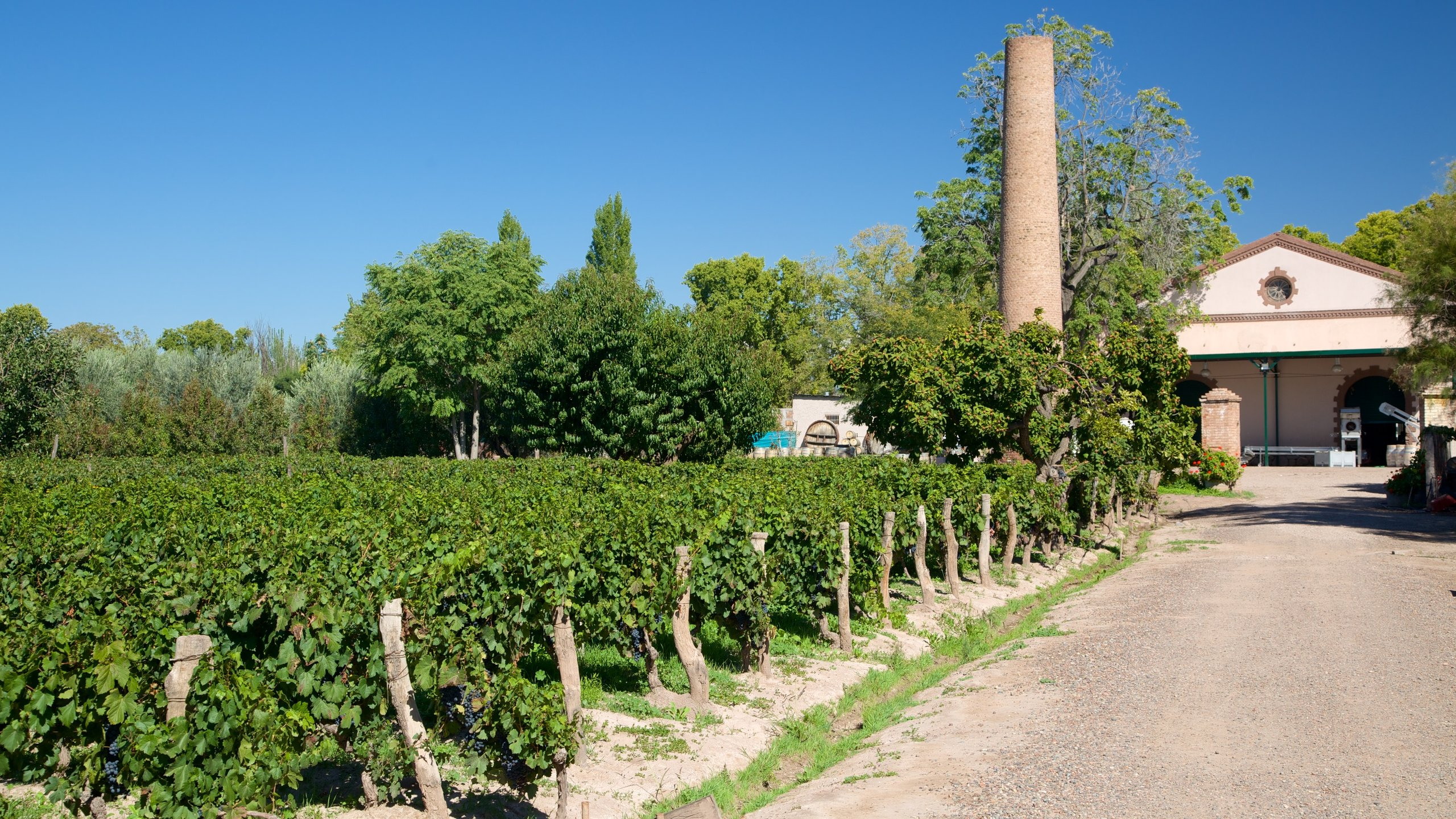 Lagarde Winery which includes farmland and a house