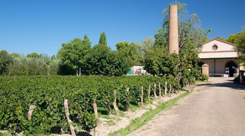 Lagarde Winery showing farmland and a house