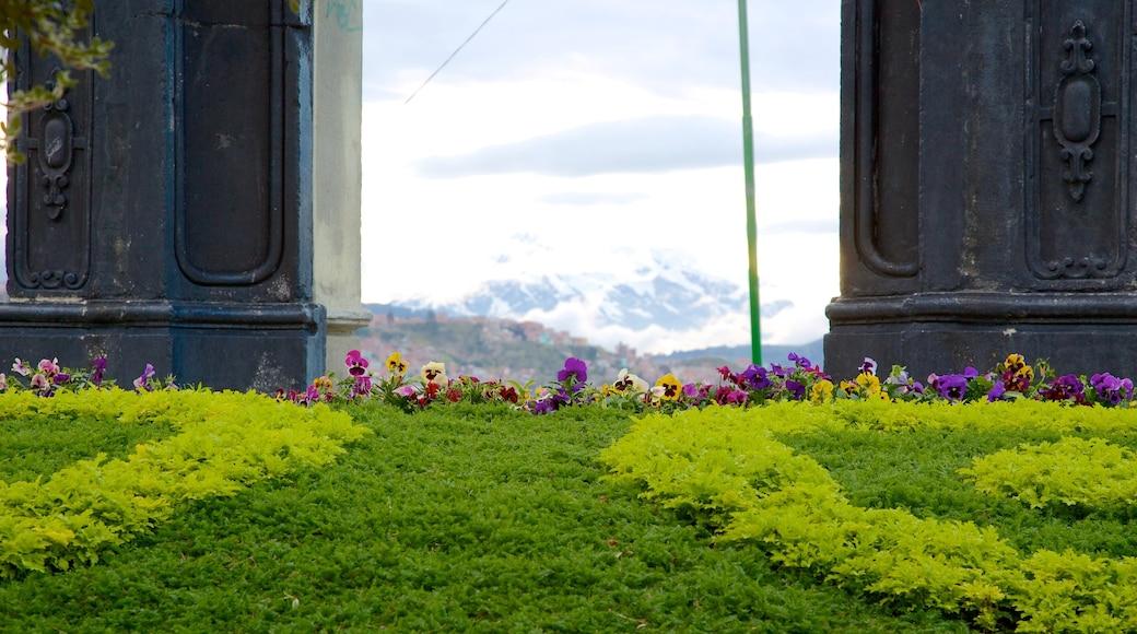 La Paz featuring a park
