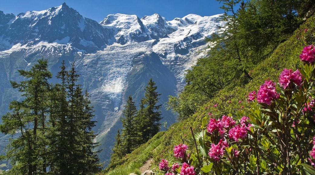 Chamonix-Mont-Blanc que incluye montañas, nieve y flores