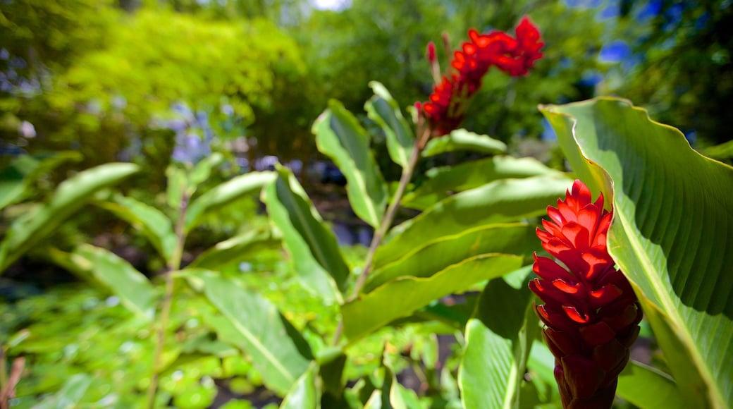 Parc Bougainville welches beinhaltet Blumen