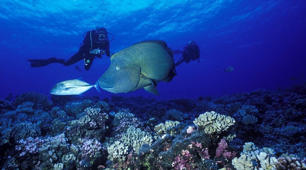 Atoll de Rangiroa montrant corail, vie marine et plongée