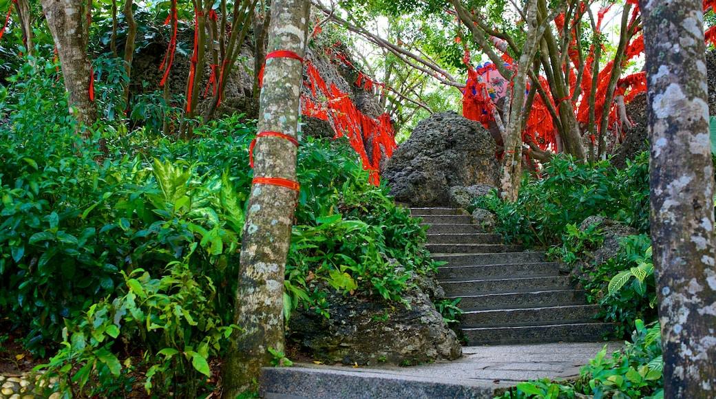Luhuitou Park featuring forest scenes
