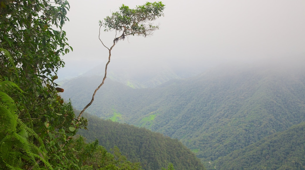 Bellavista showing forests and rainforest