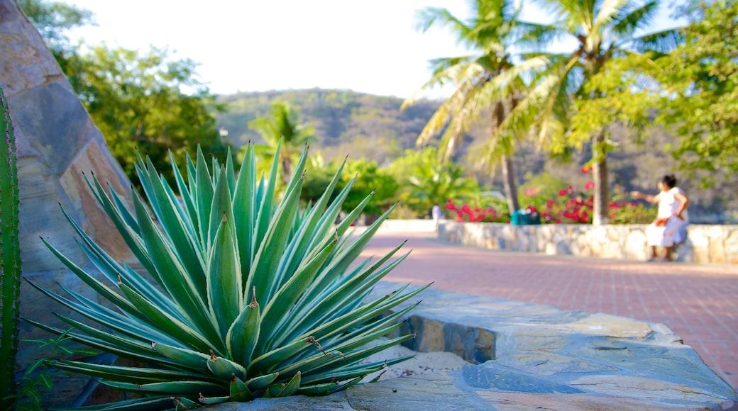 Playa La Entrega mostrando escenas tropicales y un jardín