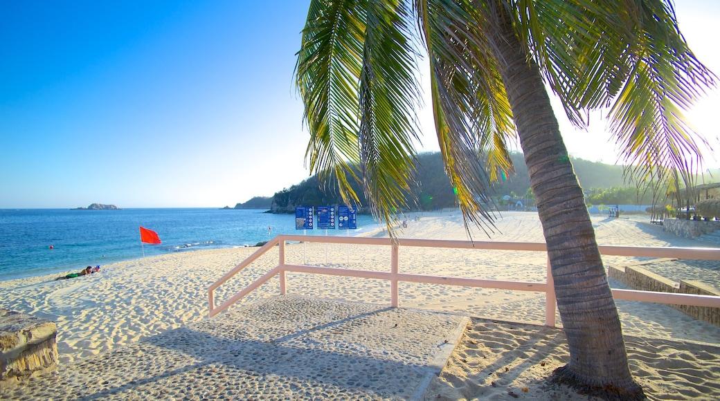 Chahue Beach showing tropical scenes and a beach