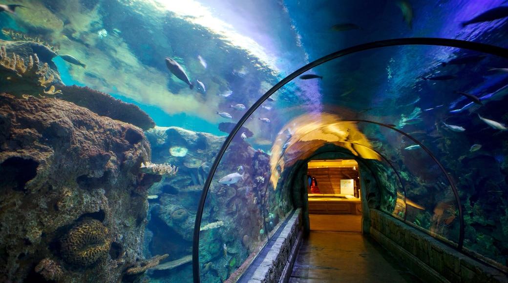 ลาสเวกัส ซึ่งรวมถึง ชีวิตทางทะเล, ปะการัง และ การตกแต่งภายใน