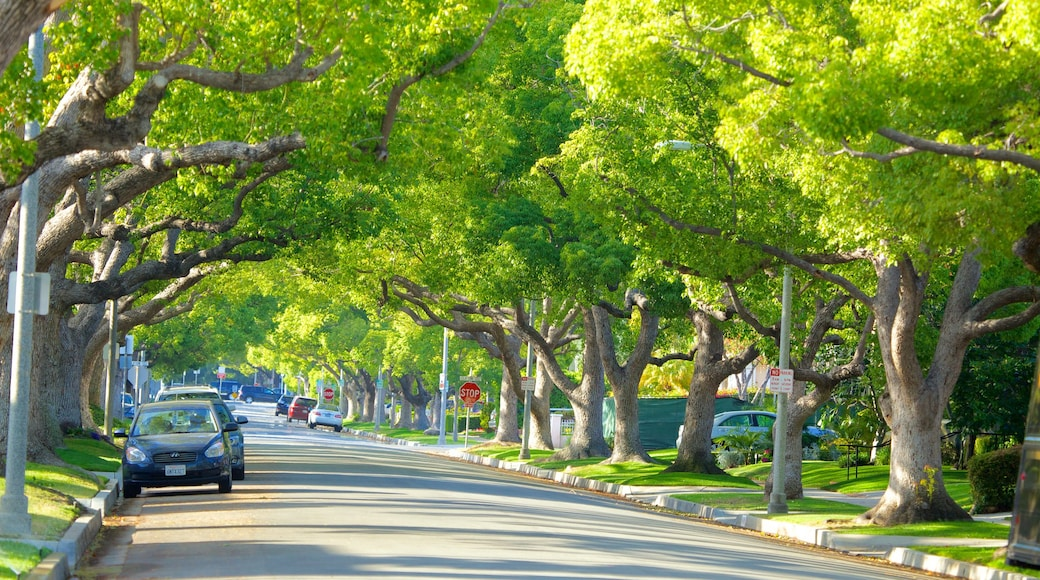 Beverly Hills featuring street scenes