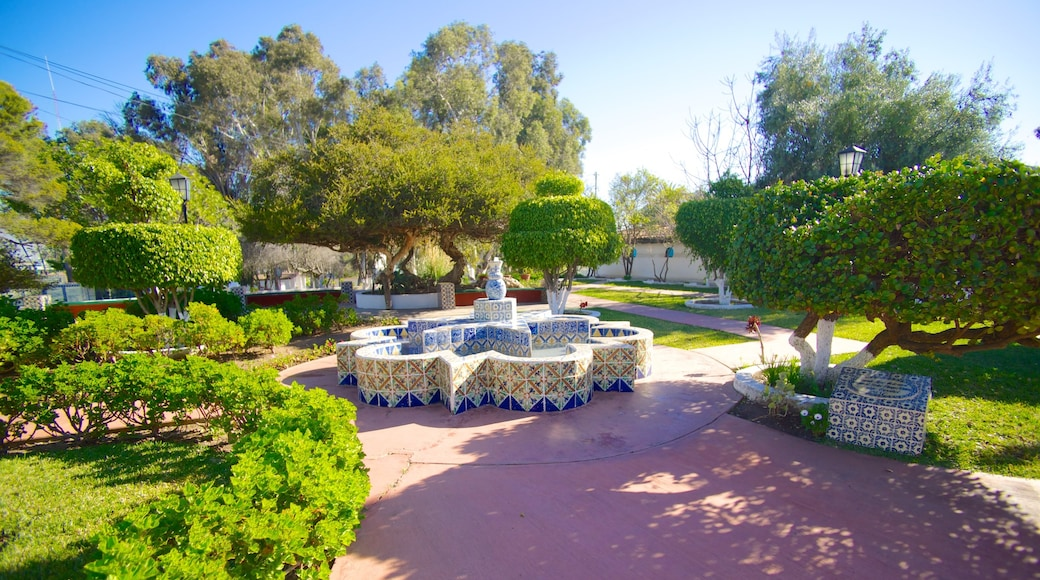 Ensenada showing a garden