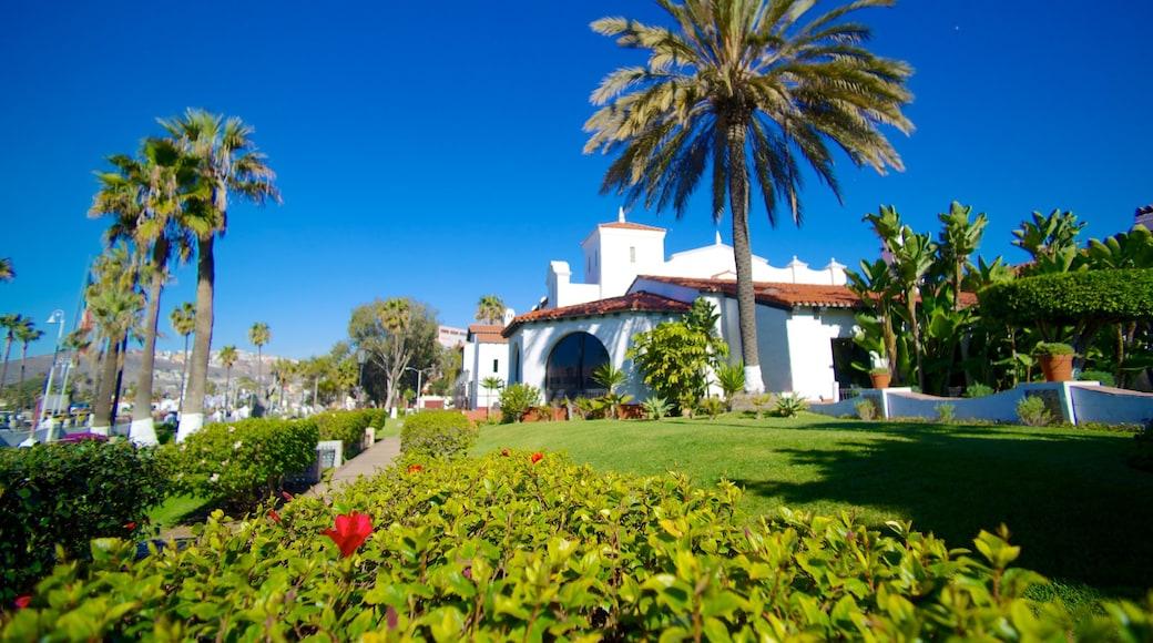 Ensenada featuring a garden