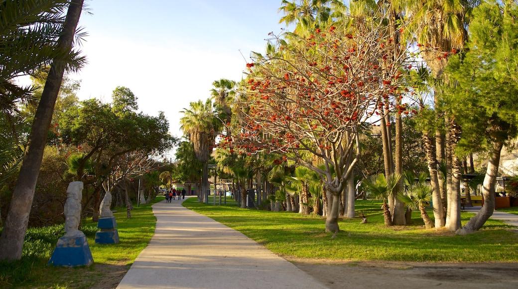 Parque Morelos ofreciendo un jardín