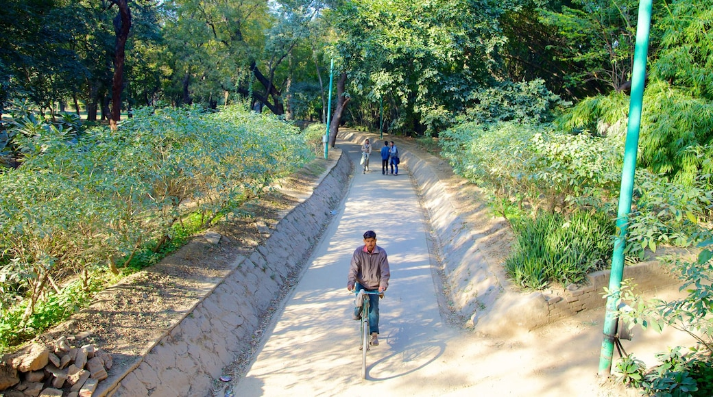 Lodhi Garden which includes cycling and a garden as well as an individual male